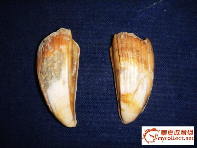 千年奇怪动物牙和民国寿山石猴子