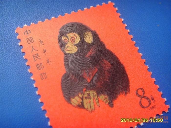 最凶猛动物 t46 庚申猴