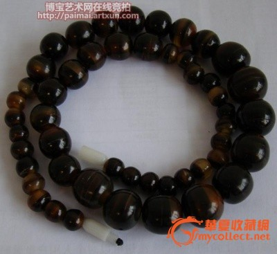 海生稀有动物玳瑁——国际保护物种