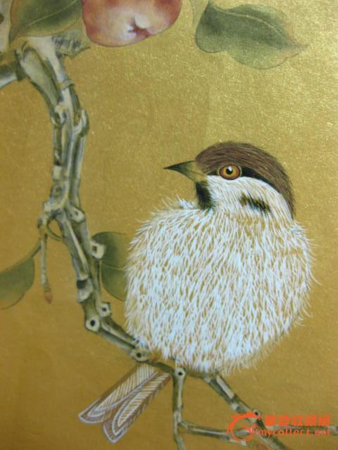 壁纸 动物 鸟 鸟类 雀 480_640 竖版 竖屏 手机