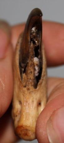 猛兽的爪子