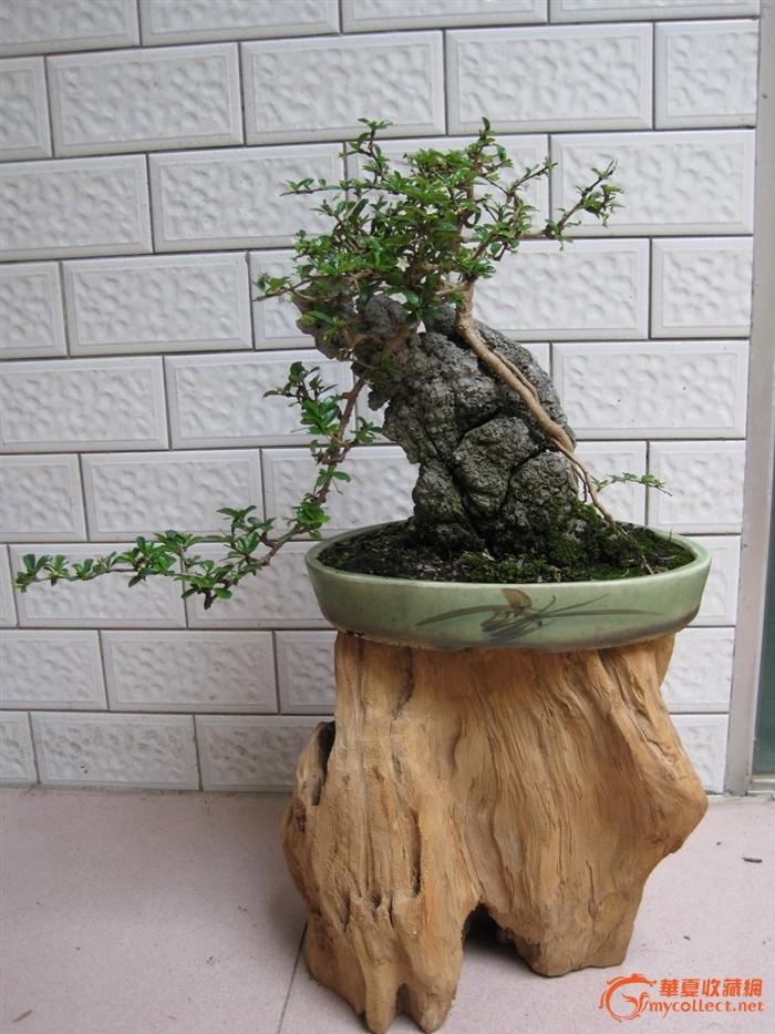 红木花架植物图片
