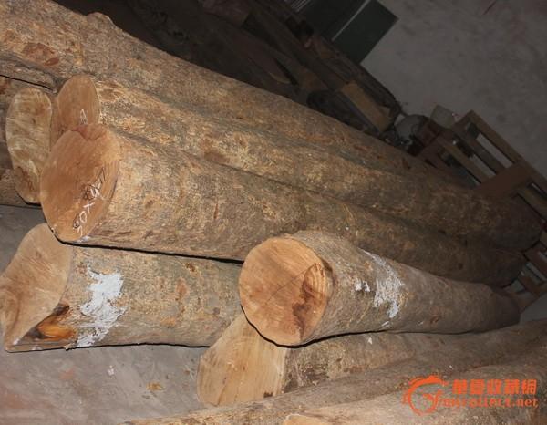 金丝楠木-原木