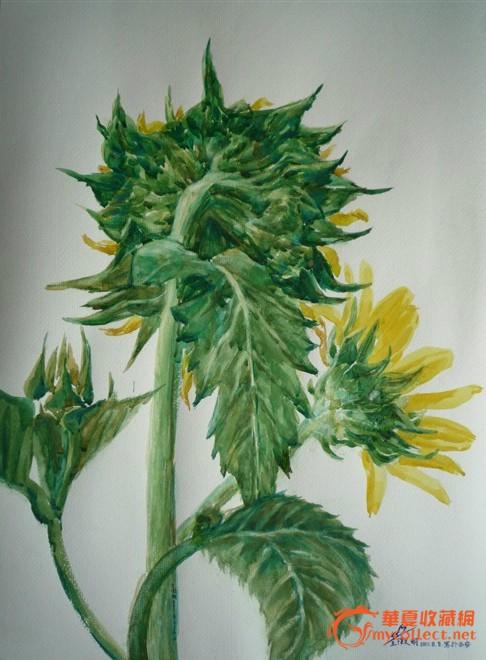 盆景 盆栽 植物 486_660 竖版 竖屏