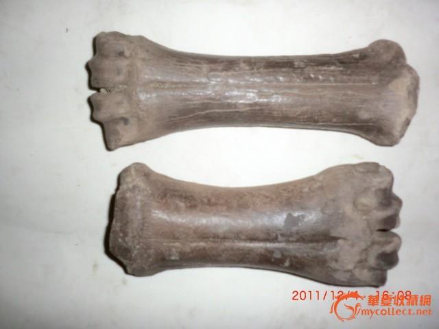 动物骨化石2个